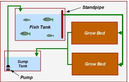 Aquaponics CHOP