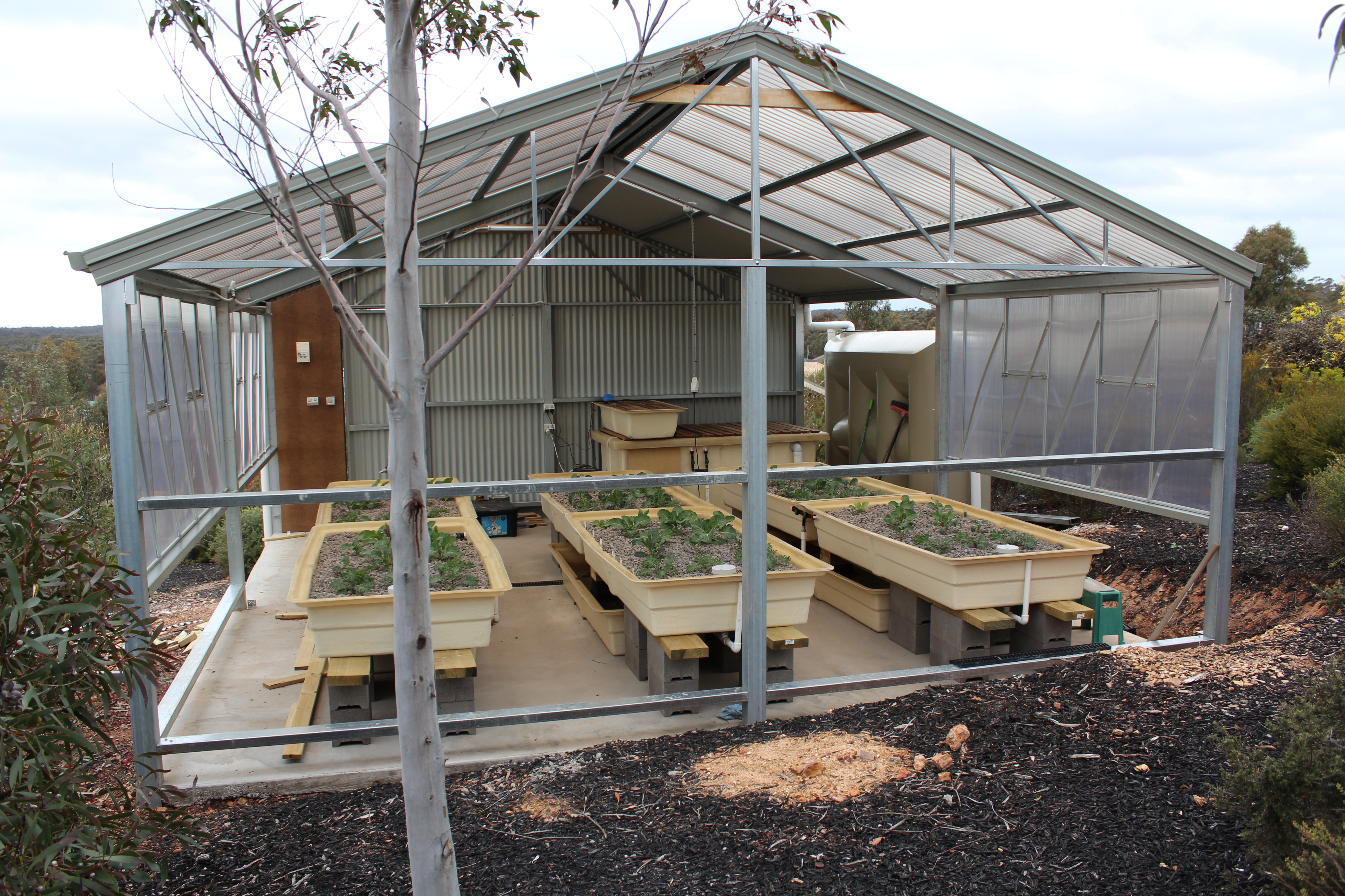 Backyard Aquaponics Greenhouse : Aquaponics ? Greenhouse nearing completion and system maturing well